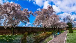 bezinningstuin.voorjaar_in_sittard_libor_bednarik_stadstuin
